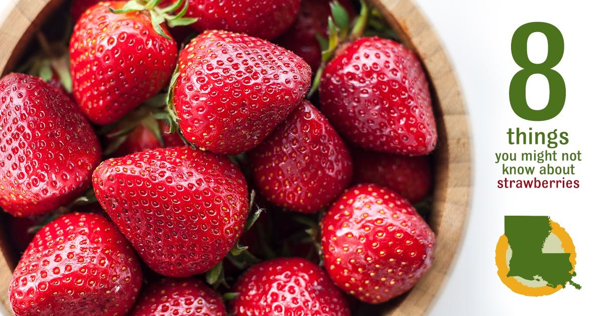 8 things you may not know about strawberries